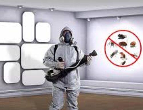 شركة مكافحة حشرات في عجمان |0561858091 | رش مبيدات